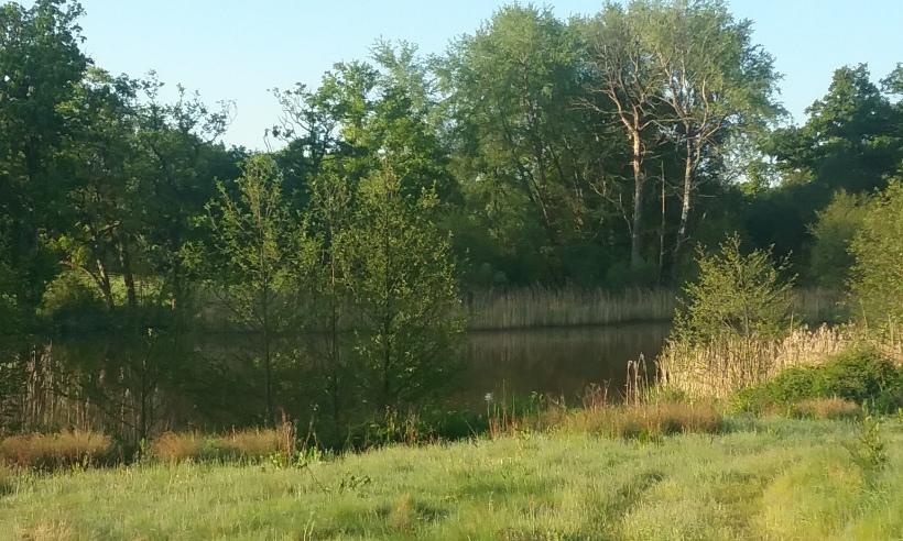 Hermitage lake.jpg